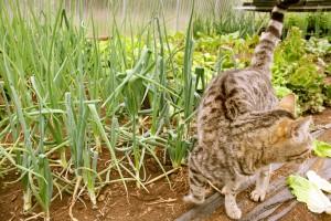 Greenhouse cat