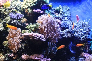 Coraltime